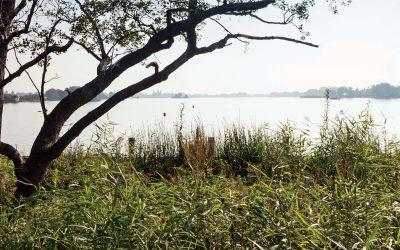 Reeuwijkse Plassen. Samen bijdragen aan een geweldige omgeving voor mens en natuur